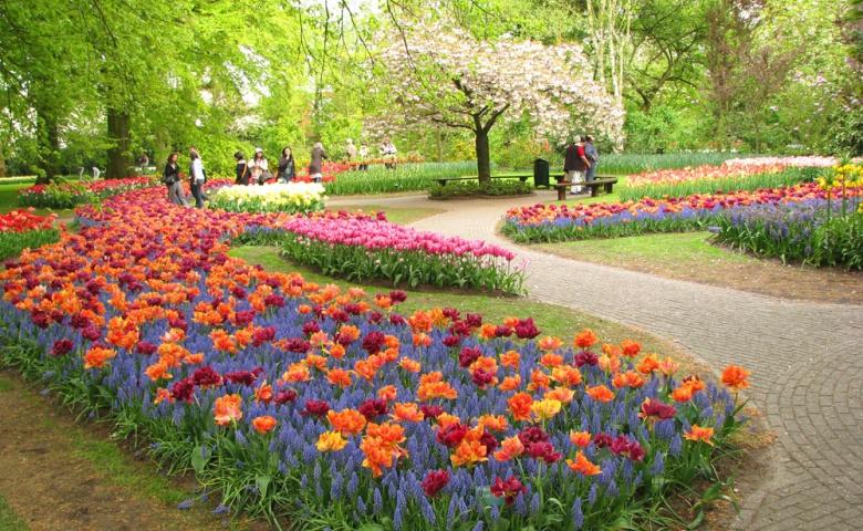 Кейкенхоф — поездка в парк цветов
