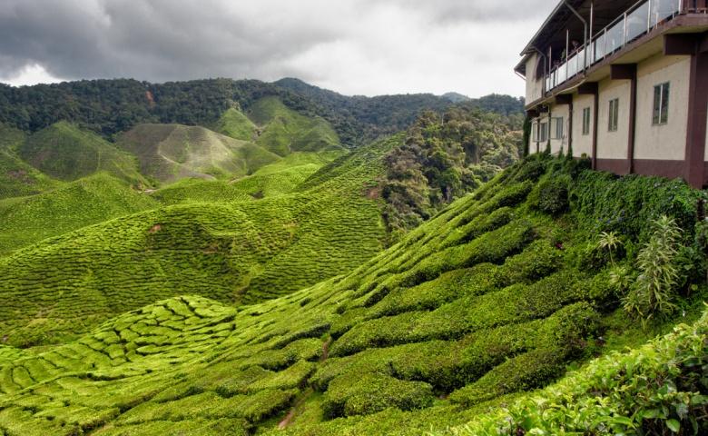 Автомобильная экскурсия из Куала-Лумпура на высокогорье Камерон