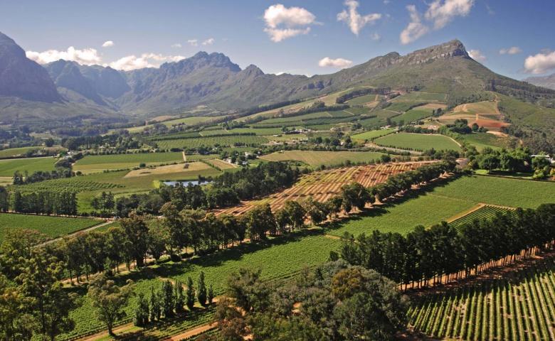 Автомобильная экскурсия из Кейптауна в винодельческий регион Вайнлендс