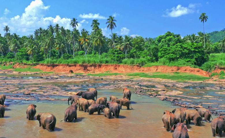Автомобильная экскурсия в слоновий питомник Пиннавала
