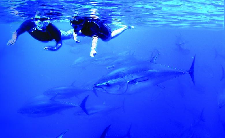 Туна Тур — встреча с морским монстром