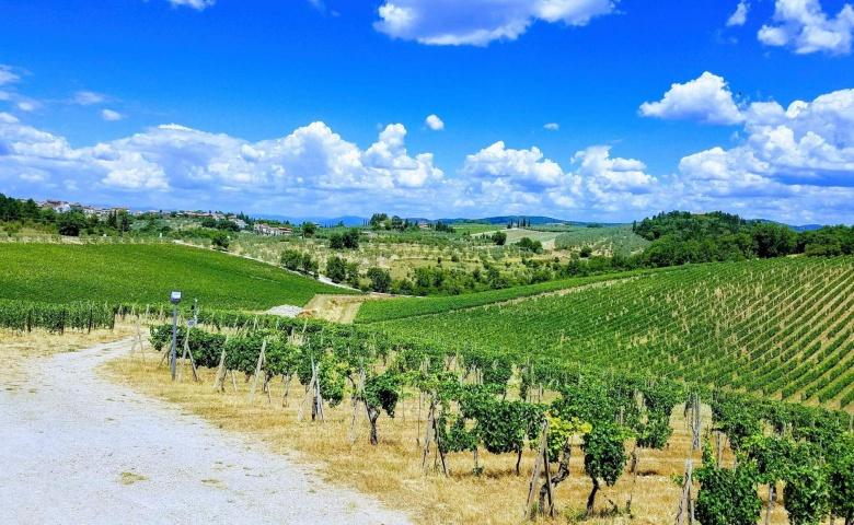 Энотуры по винным зонам Тосканы
