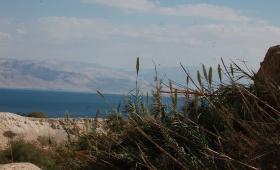 Обитатели Иудейской пустыни