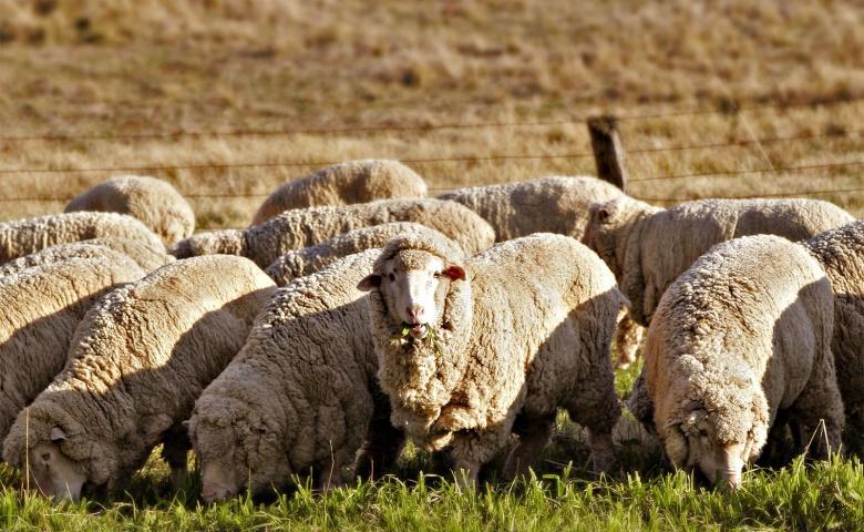 Экскурсия в глубинку Австралии на австралийскую ферму с шоу фермеров