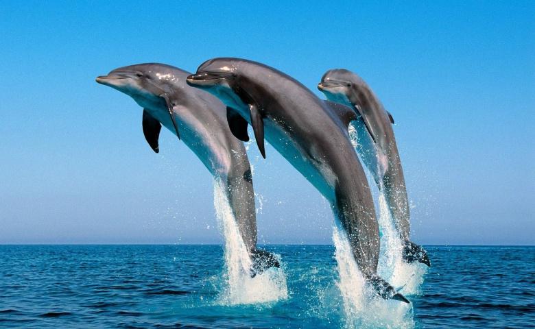 Путешествие за дельфинами