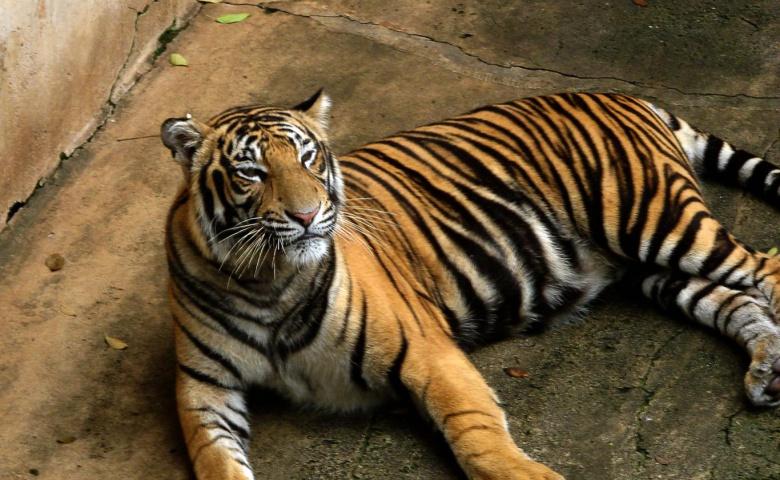 Экскурсия в зоопарк тигров и Аквариум