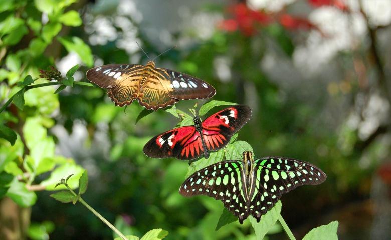 Экскурсия в парк «Мир Бабочек»