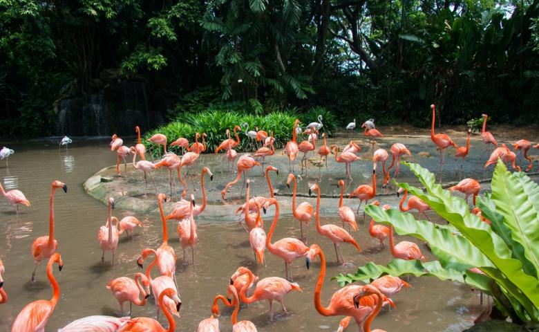 Экскурсия в Сингапурский зоопарк