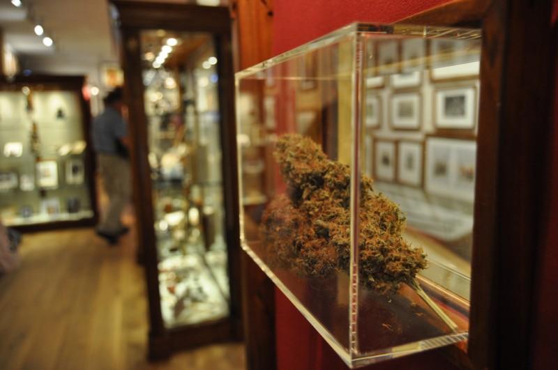 Амстердам музей конопли куплю семена марихуаны форум